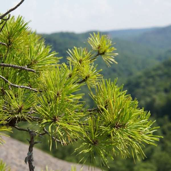 Sustainable Hiking Leave No Trace