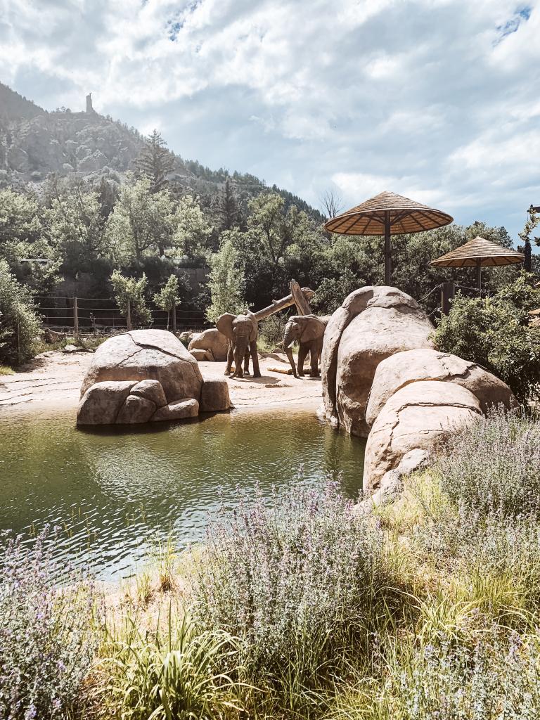 Elephants at the Cheyenne Mountain Zoo, Colorado