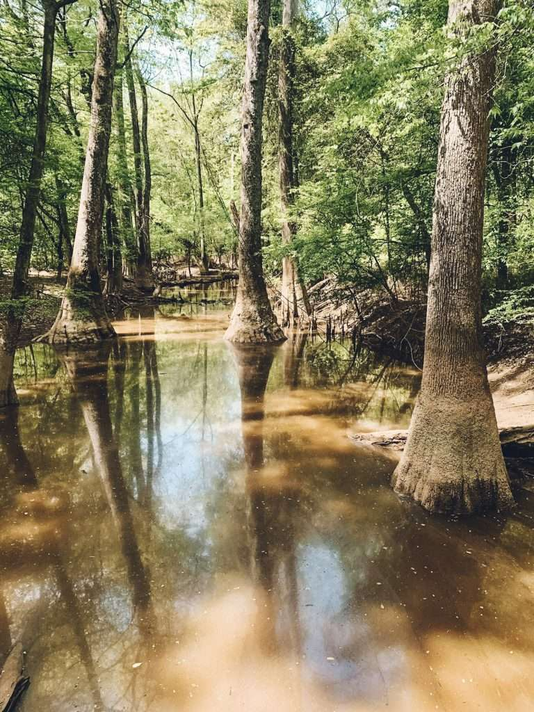 Congaree National Forest - Best Places to Hike In The US, Best Family Budget Vacations, Best Hikes US, Best USA Hikes, Hiking Destinations, Underrated vacation spots USA