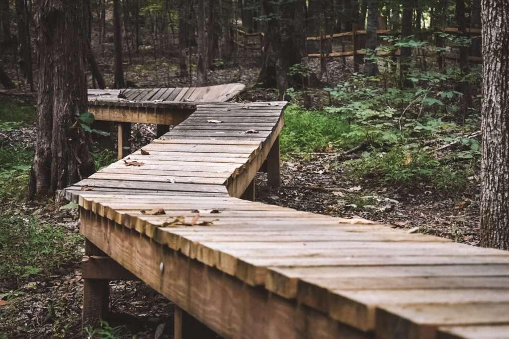 Boardwalk trail AT SAUNDERS SPRINGS kentucky