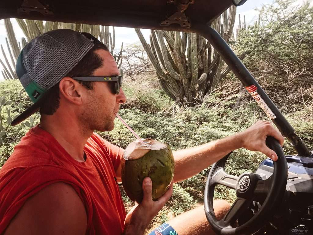 Grab a coconut on a snack break in ARuba - aruba excursions, UTV rental Aruba, ATV Rental Aruba, Aruba ATV Tours, Excursions in ARuba