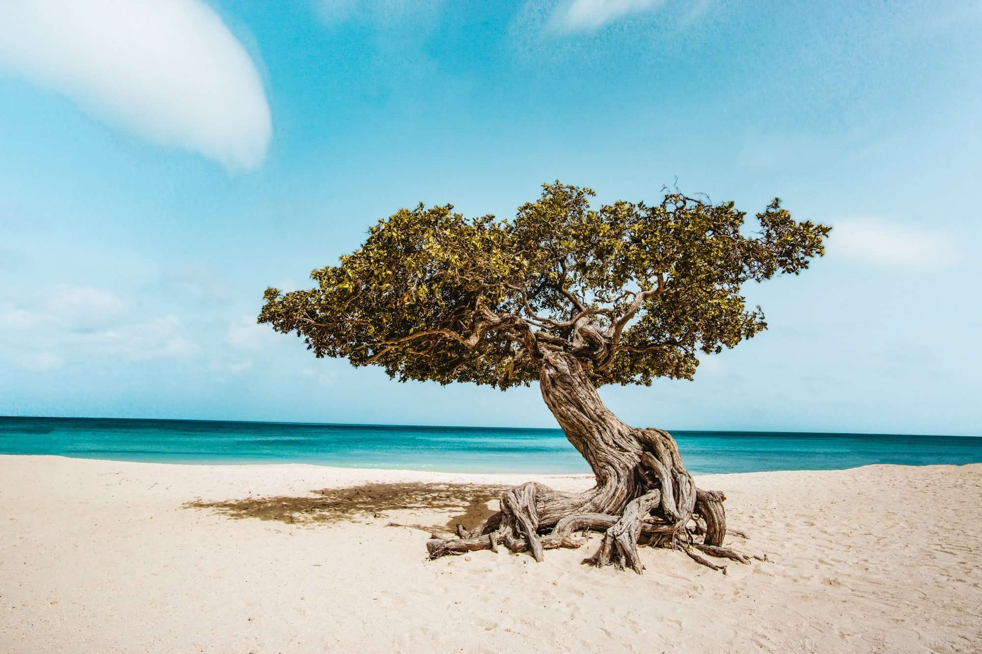 Your Ultimate Guide To 1 Week in Aruba